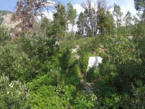 hiking the ruby mountains - example of faint game trail