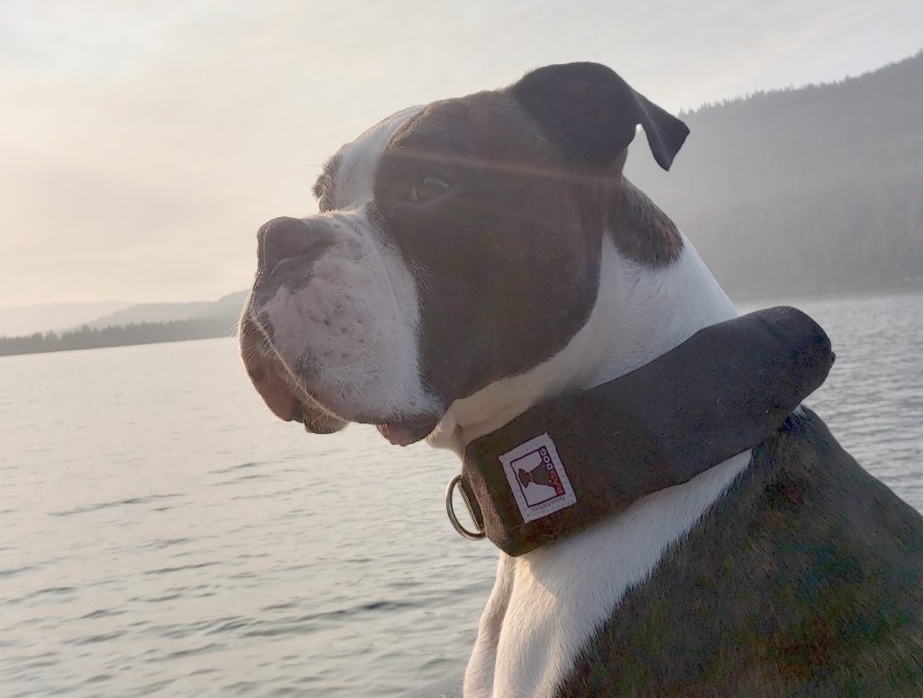 best large dog rectractable leash - rad dog hoolie 2