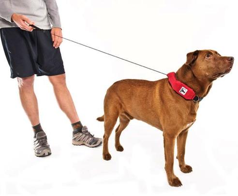 best large dog retractable leash - rad dog extended