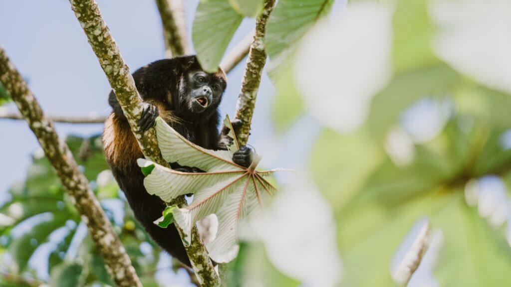 REI Outdoor Adventures 2020 - Costa Rica Escape PC REI