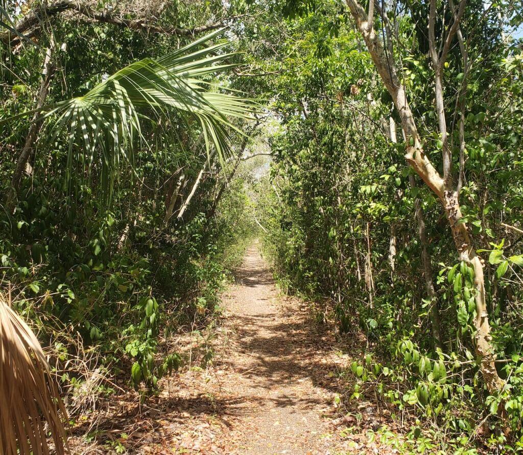 Bear Lake Trail Crocodiles in the Everglades and Keys Hospitality