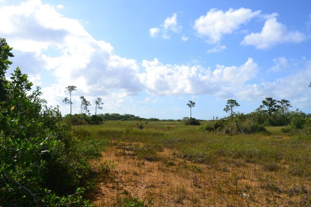 Hammocks of the Everglades