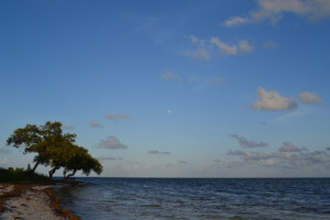 Moonrise from Curry Hammock State Park
