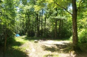 Wash Creek Dispersed Camping